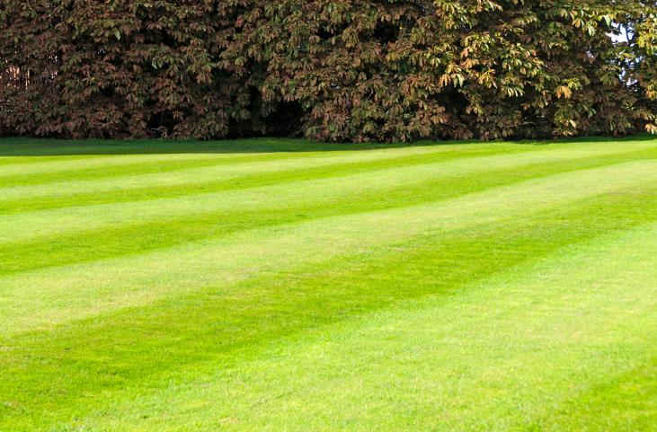 D&J Lawn Service
