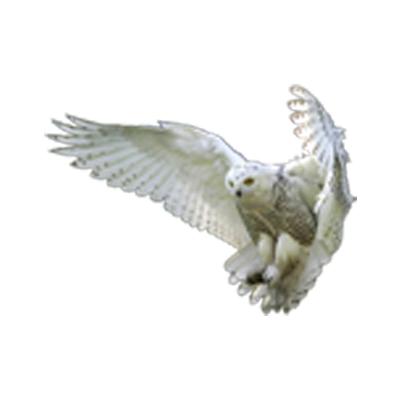 White Owl Construction L.L.C