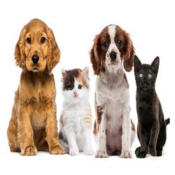 Whiteway Pet Shop