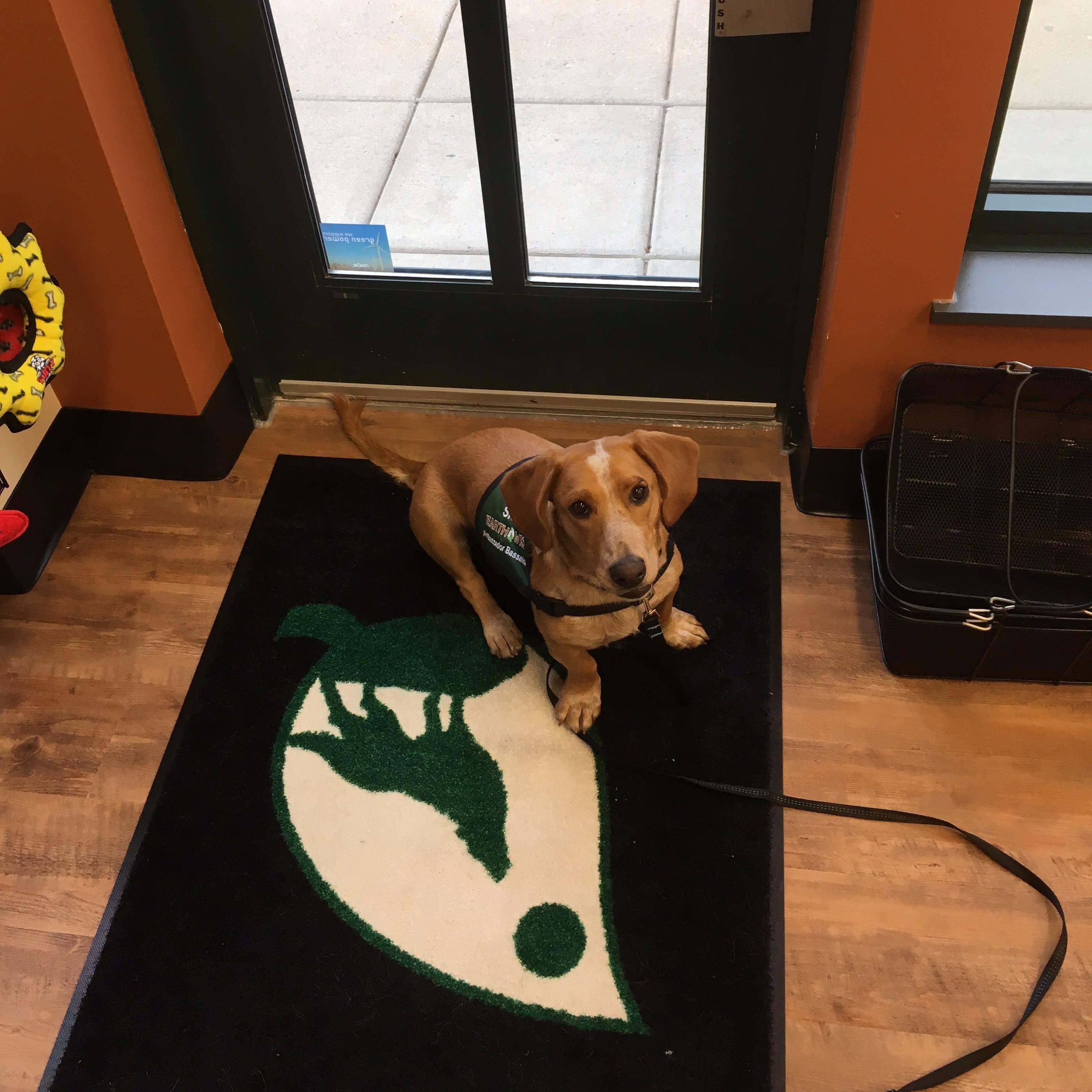 Dog Lovers Grooming Madison Wi