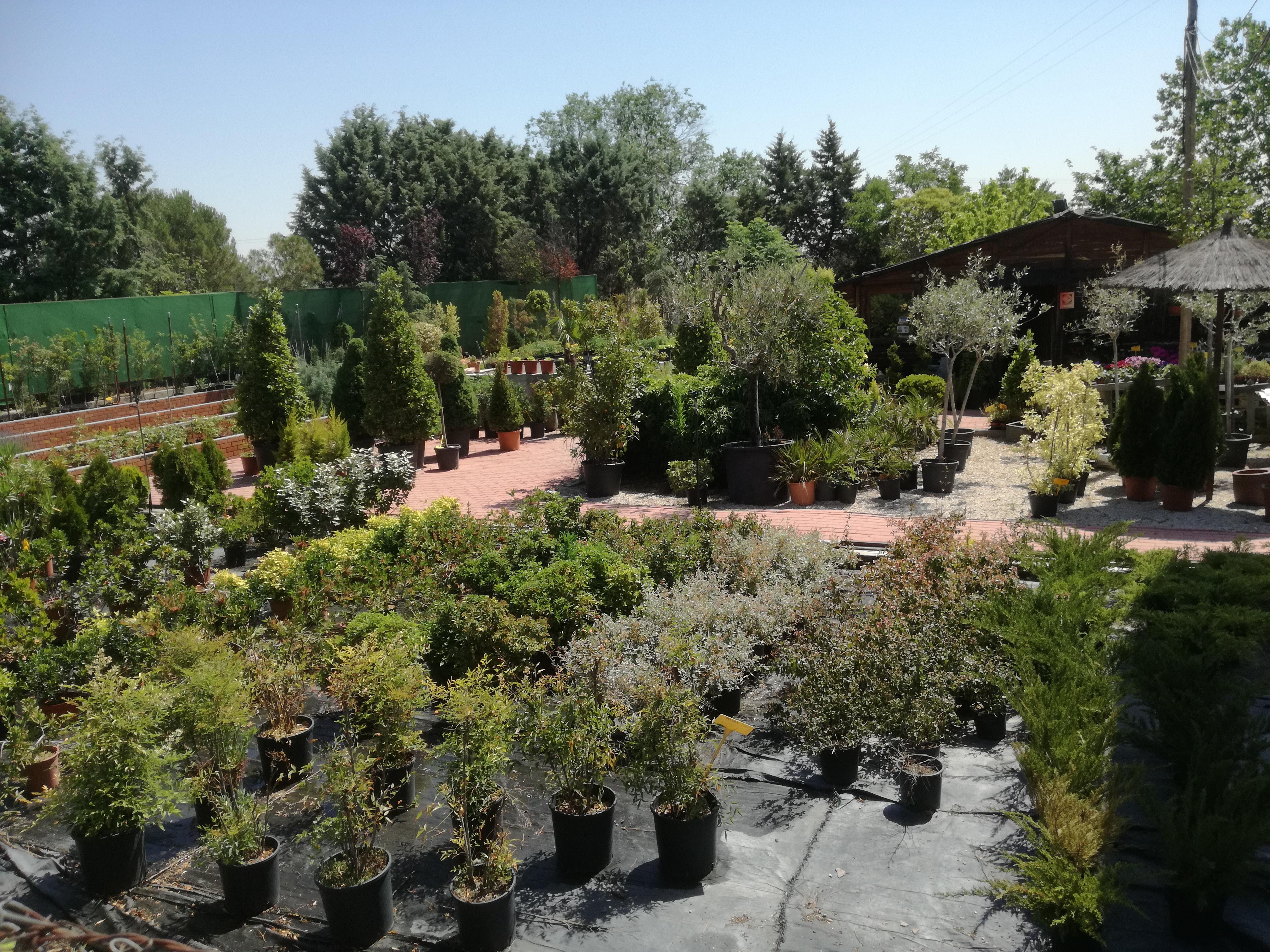 Jard n c sped centro de jardiner a en brunete for Centros de jardineria en madrid