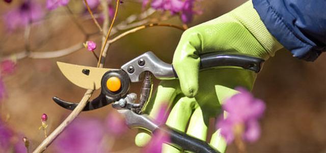 IWA Garden Care
