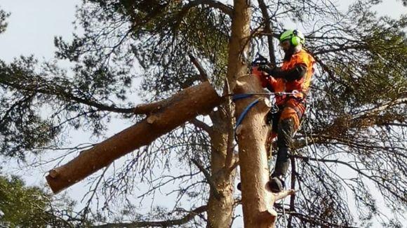 Metsäpalvelu Kaatovänkäri