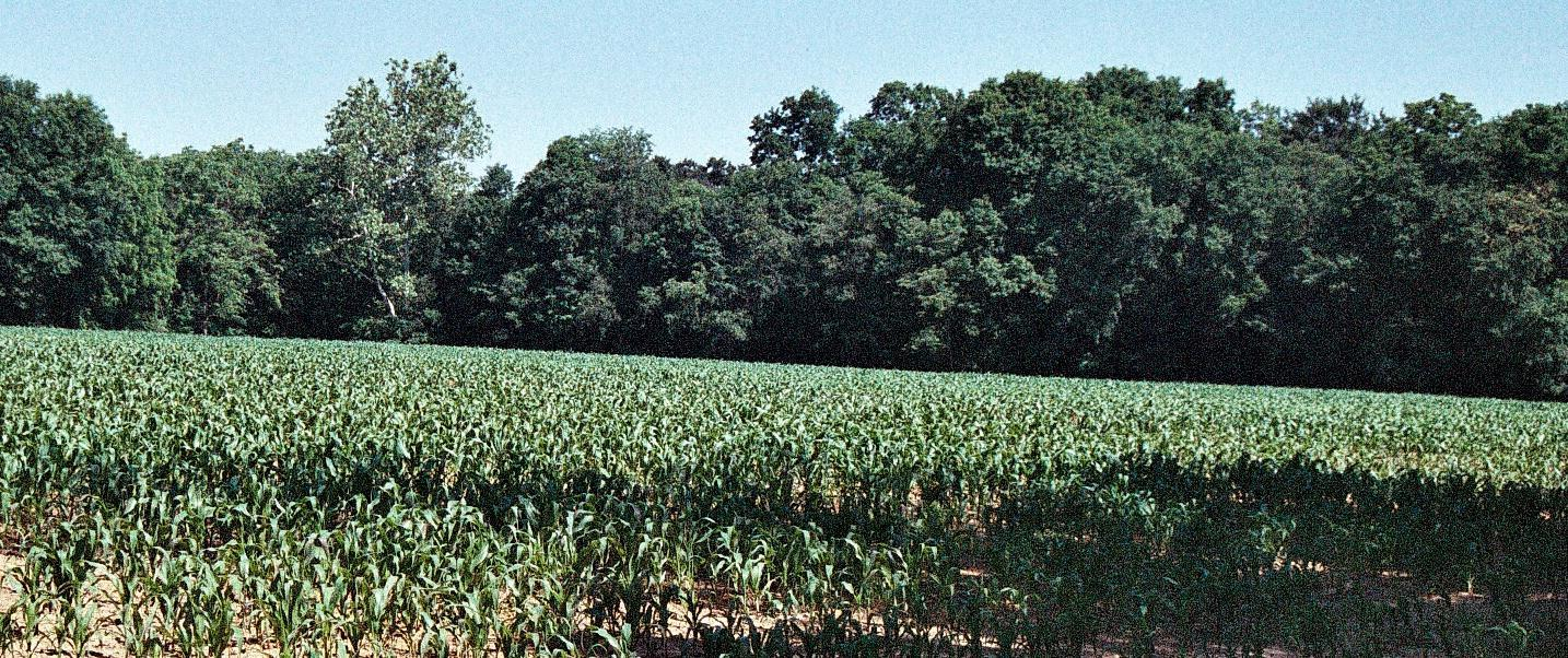 Cossel Farms Inc