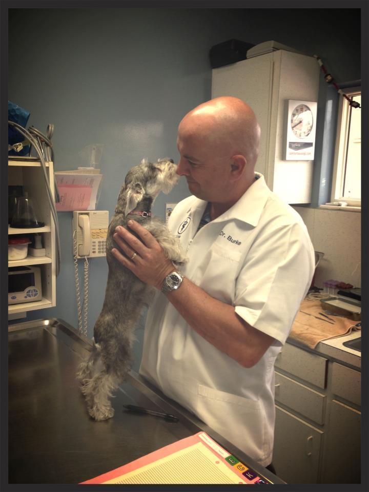 Ormond Beach Veterinary Clinic Ormond Beach Fl
