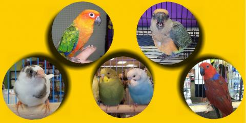 Big bird sale this Saturday & Sunday at The pet Hale!