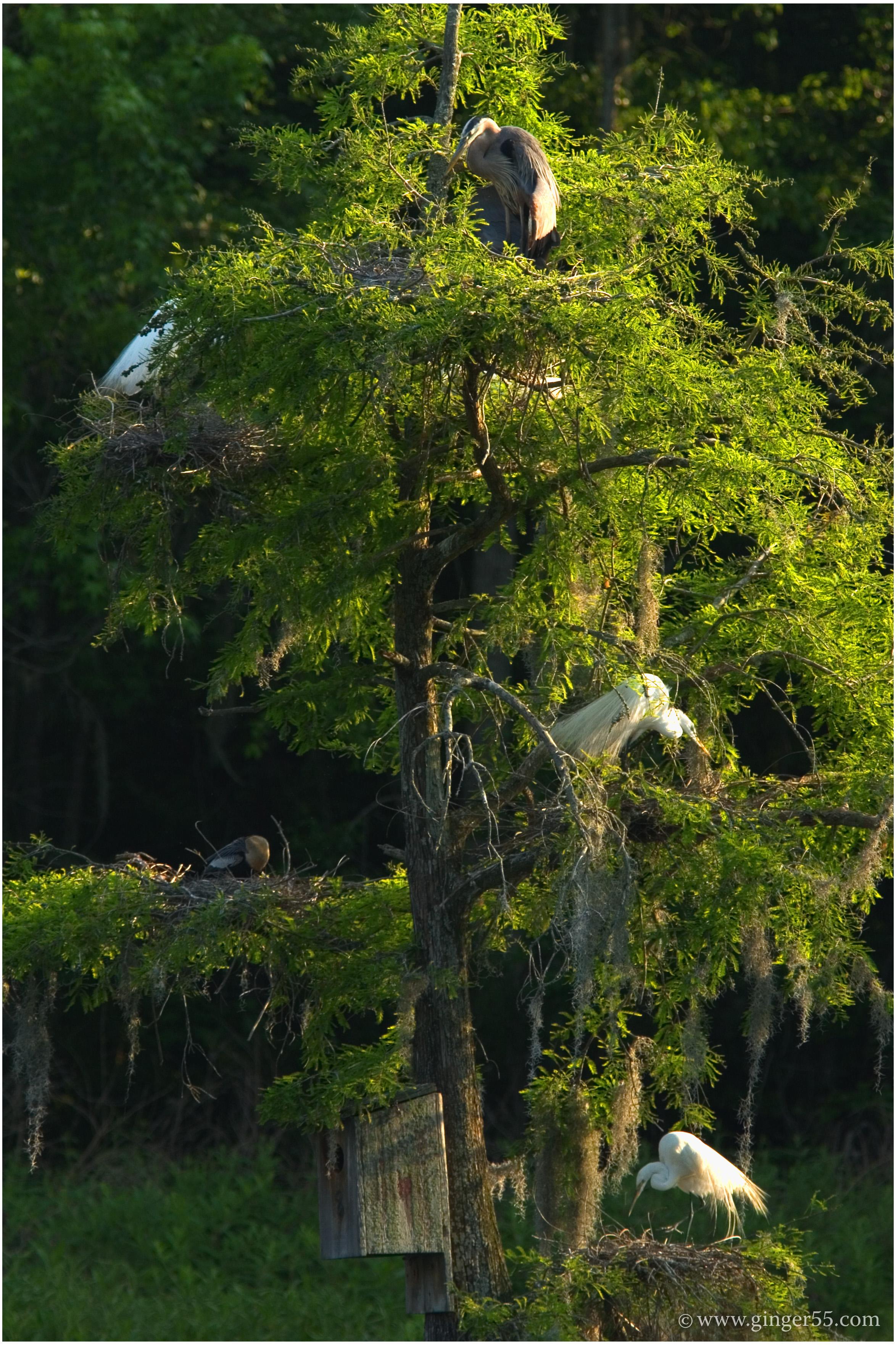 Magnolia Plantation & Gardens image 3