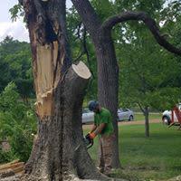 Knock on Wood Tree Services