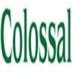 Colossal Construction, Inc. - Ansonia, OH - General Contractors