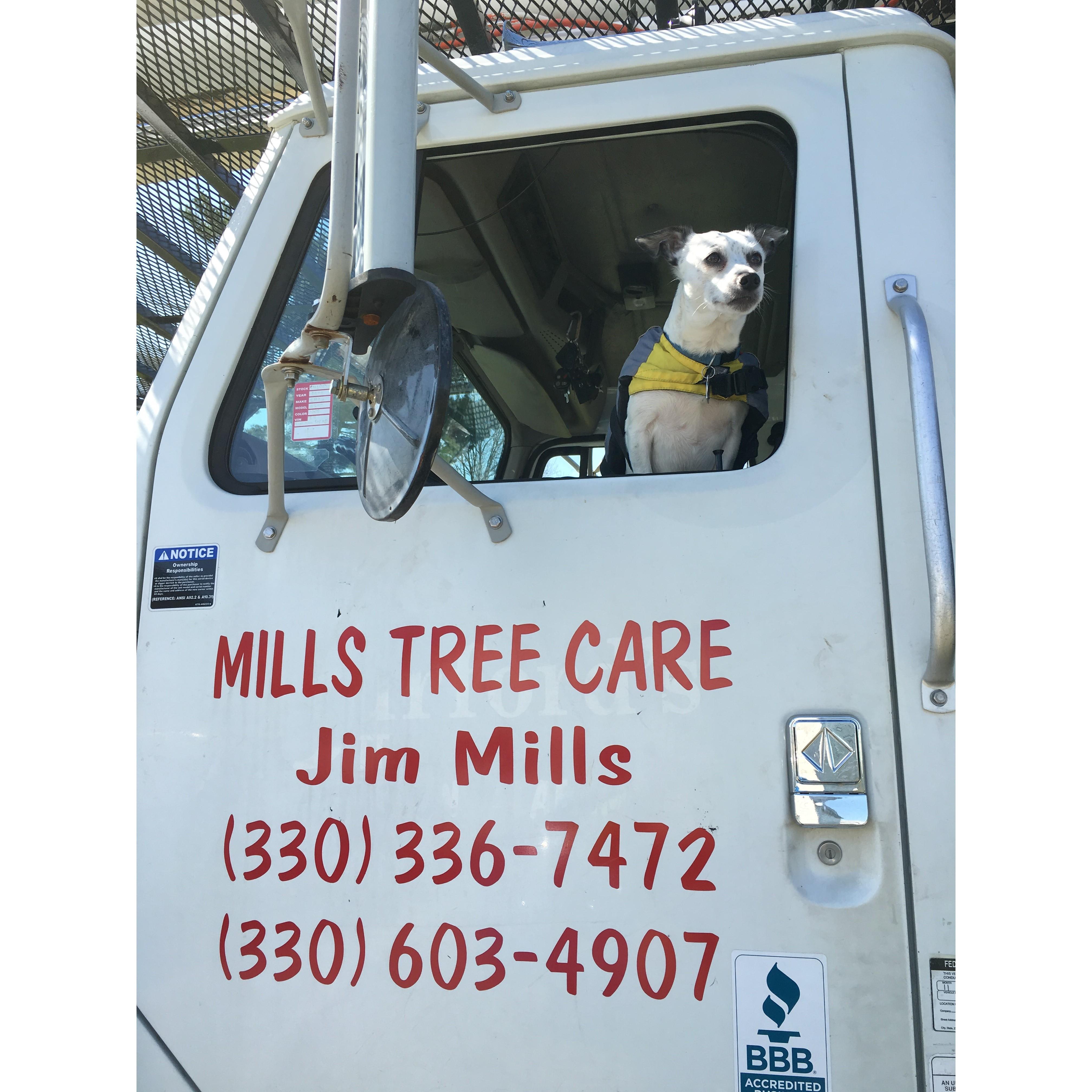 Mills Tree Care LLC