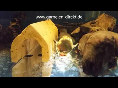garnelen-direkt.de