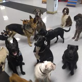 Dog Daycare Blue Collar doggie daycare, LLC Syracuse (315)907-3454