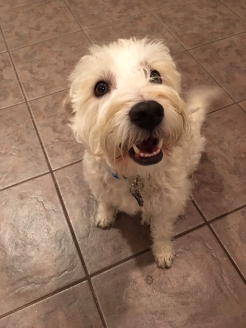 April's-Pet-Care-Pet-Sitting-Scottsdale-AZ-Dog-Visits