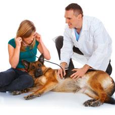 Brooklyn Cares Veterinary Clinic - Brooklyn, NY