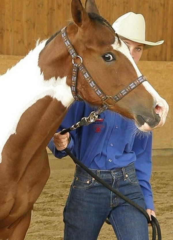 Ing. Luděk Štůrala - Svět koní