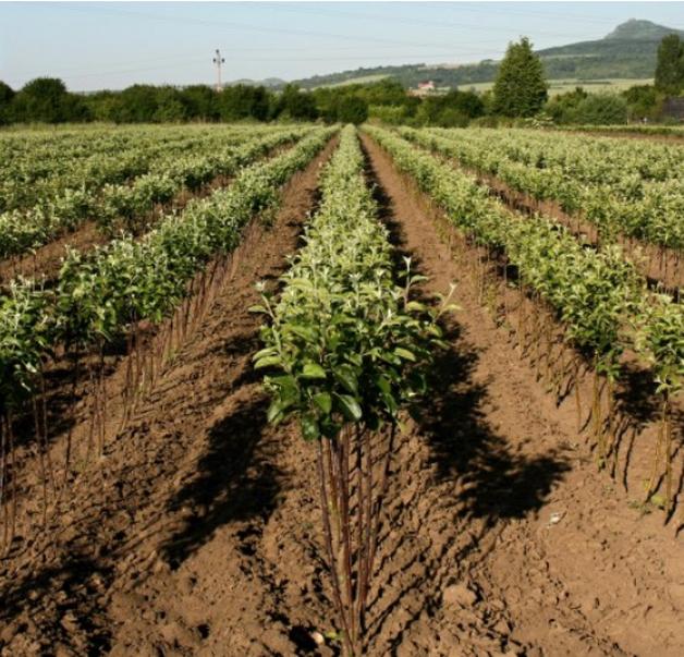 Ovocné a okrasné školky Kukla