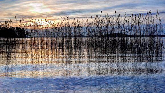 Suomen Luonnonsuojeluliitto ry
