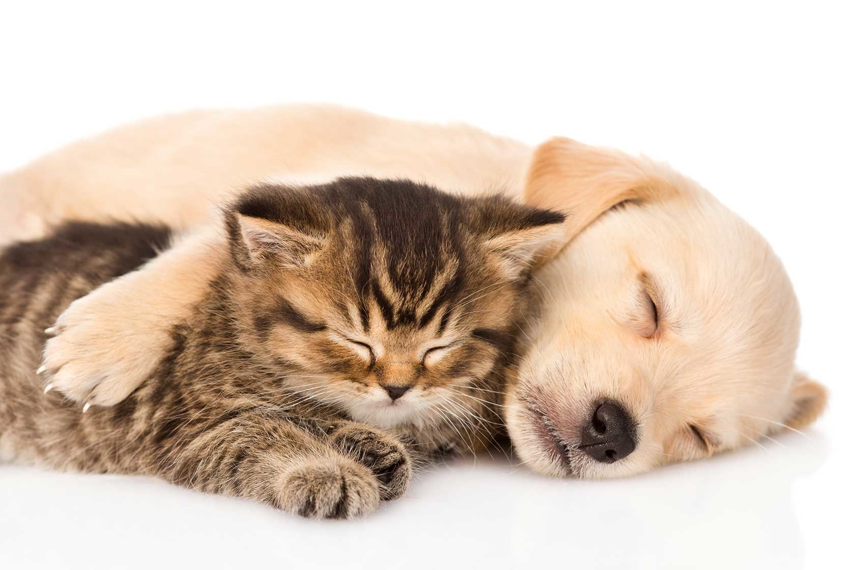 Greenwich Veterinary Services Brantford (519)758-1100