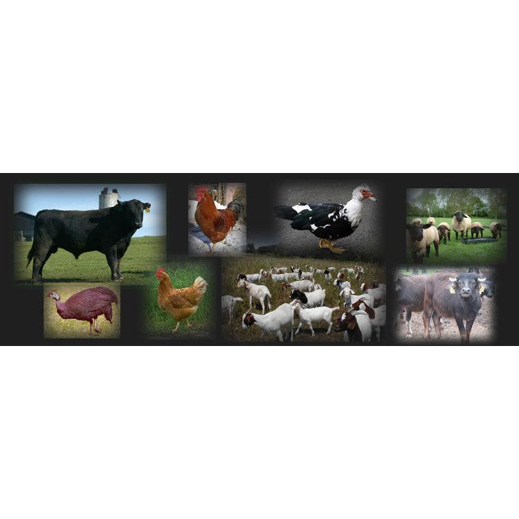 Riella Farms - Manteca, CA 95336 - (209)858-2735 | ShowMeLocal.com