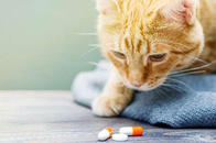 Our fully stocked pet pharmacy and helpful, knowledgeable staff will make sure your pet gets the medications they need.