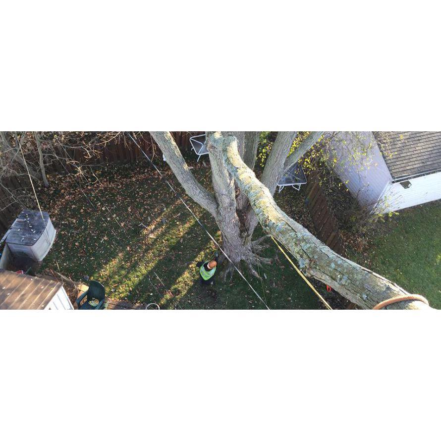 Tree Master Tree Care & Landscape Supply