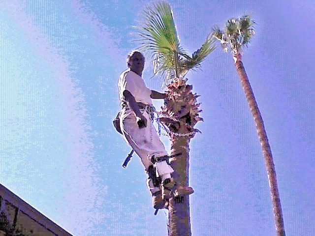 Willie Neals Trees Etc.