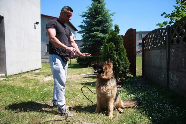 Szkolenie Psów Spartakus K-9 Łukasz Kwiatek