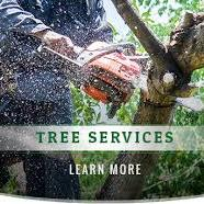 Monkeys Tree Services Inc Philadelphia (267)770-1155