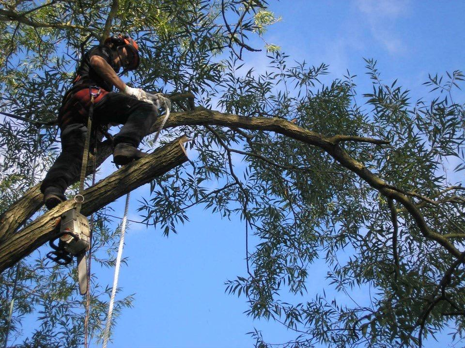 Clements Tree Care