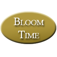 Bloom Thyme