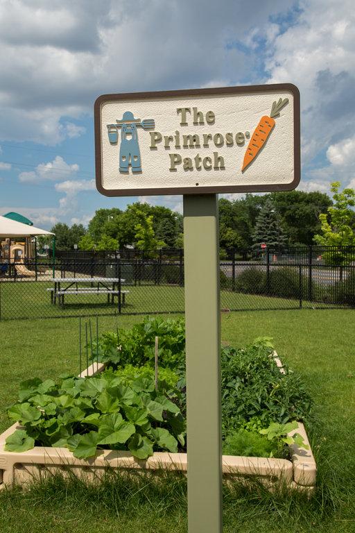 preschool brooklyn park mn primrose school of champlin park in park mn 584