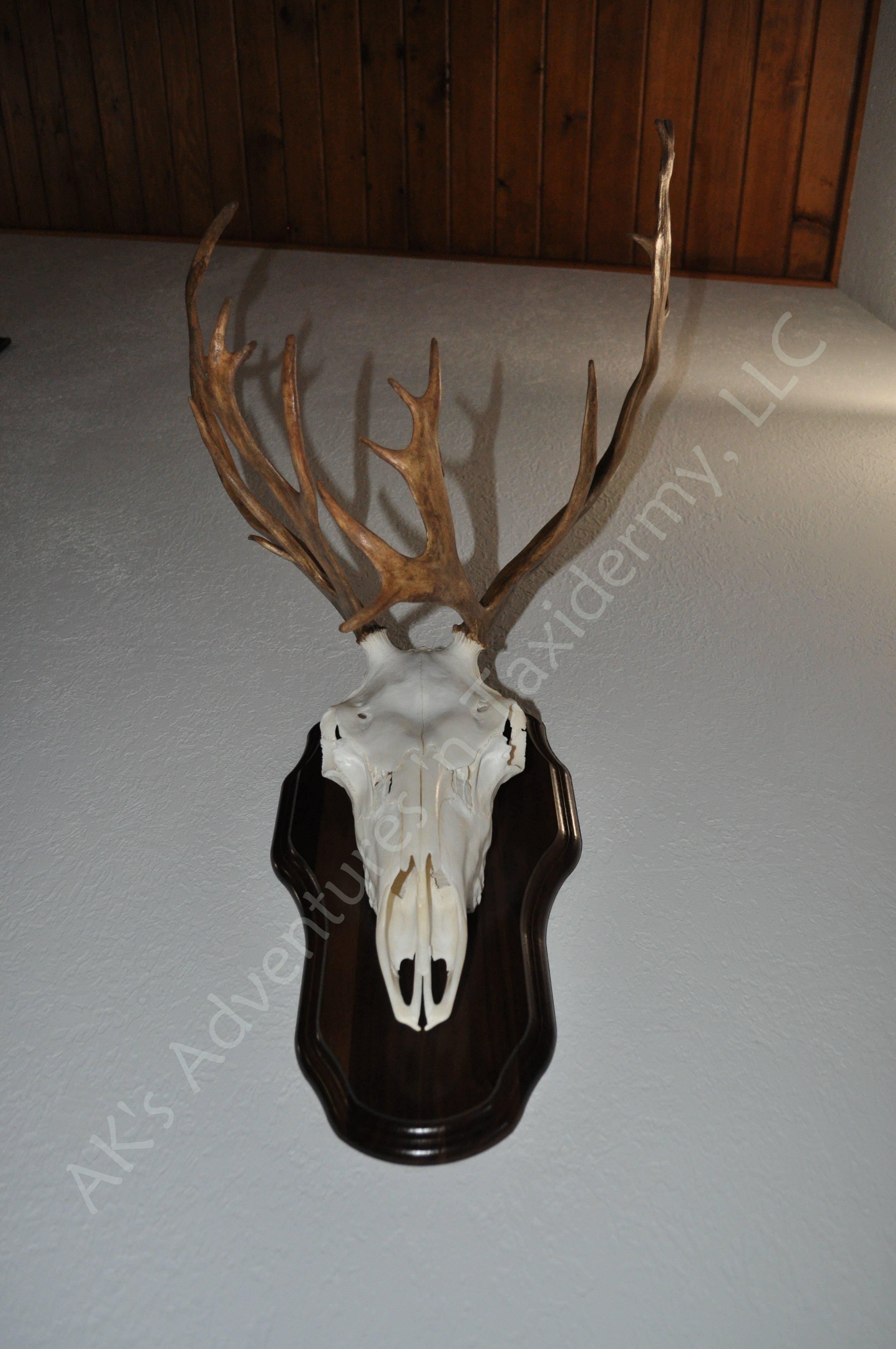 Caribou European