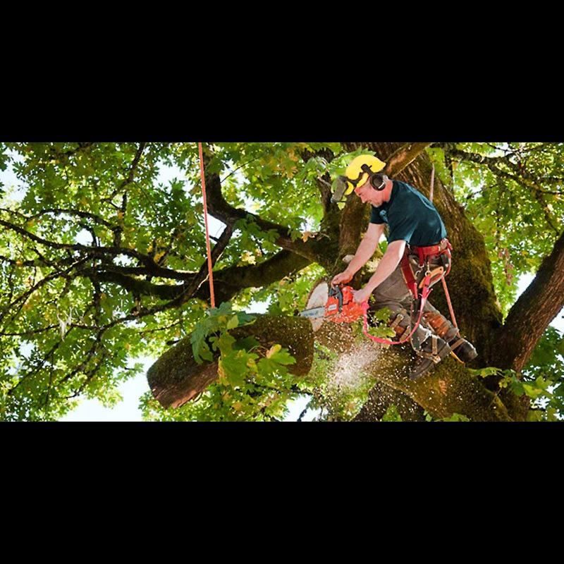 Bull Pine Tree Service and Property Maintenance - Sanford, ME - Tree Services