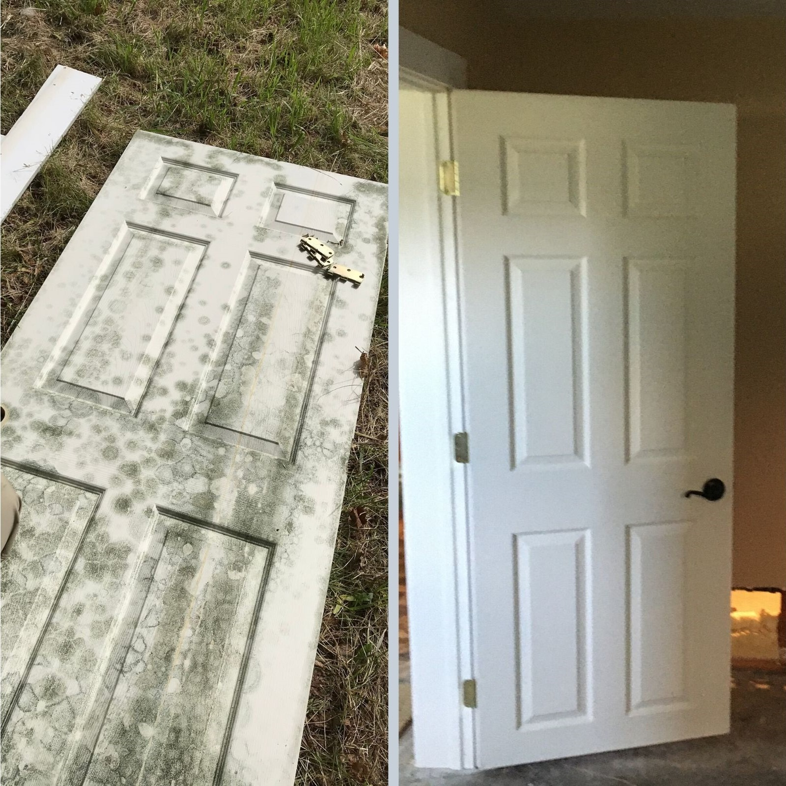Before and After Mold Remediation in Missoula