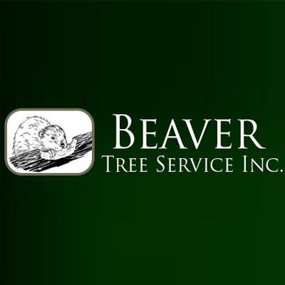 Beaver Tree Service Inc - Salisbury, MD - Tree Services