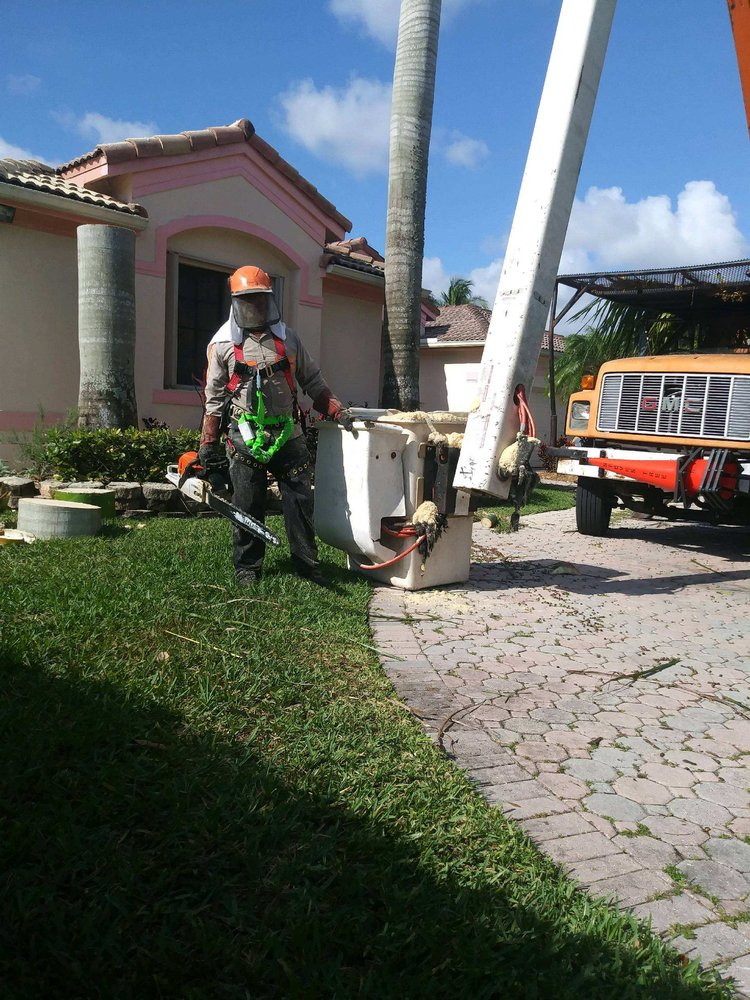 Amen Tree Service Inc - Miami, FL 33177 - (786)474-5068 | ShowMeLocal.com