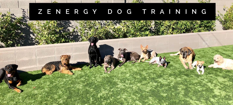 Zenergy Dog Food