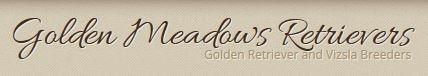 Golden Retriever Puppies - Golden Meadows Retrievers - Moorpark, CA - Breeders