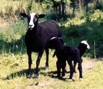 Vos Kaasboerderij De
