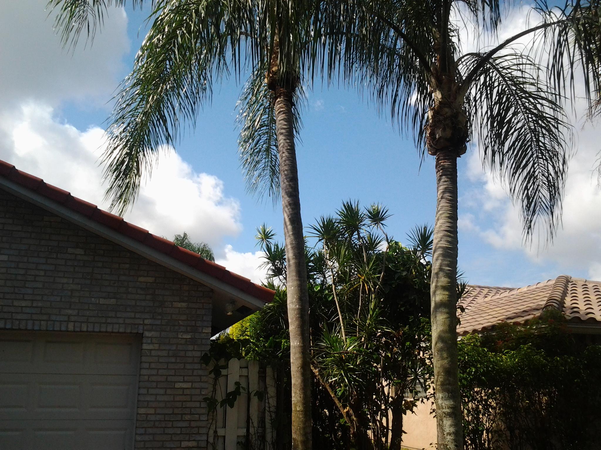 GrassCat Tree & Lawn Service