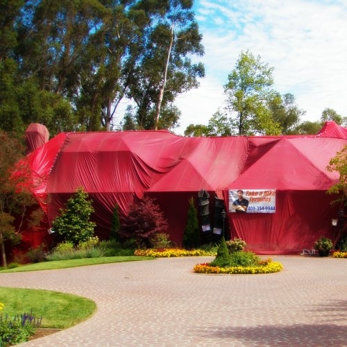 If the best solution for termites or other pests is fumigation, call us. We'll treat your home and property with care.