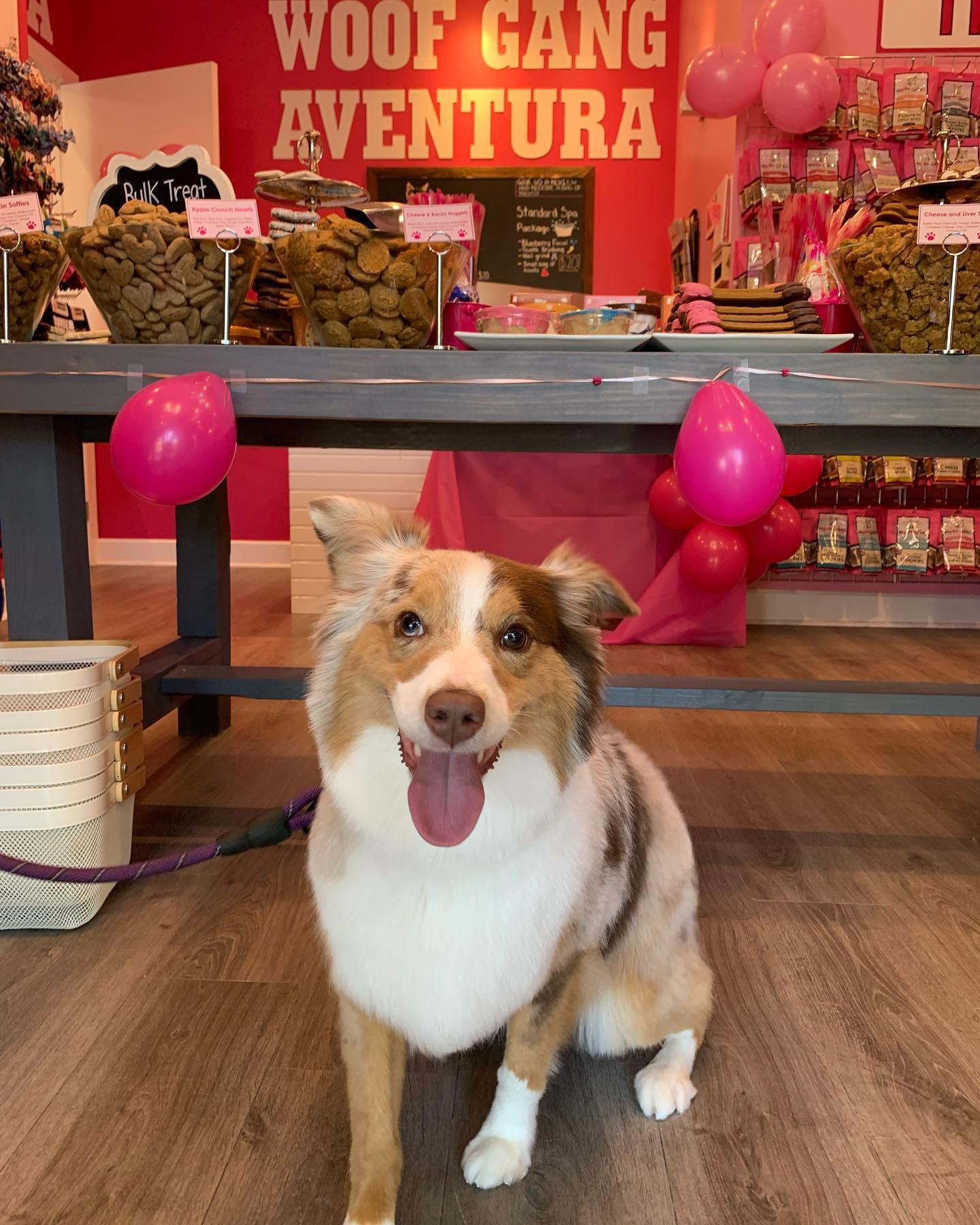 Do you need to travel products for your pets? Woof Gang Bakery & Grooming Aventura will deliver everything from food and supplements to treats, clothing, bedding and travel gear to keep your animals happy and healthy while on the journey.