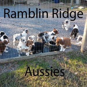 Ramblin Ridge Aussies