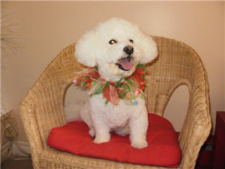 Images Doggie Styles Grooming Salon & Boutique
