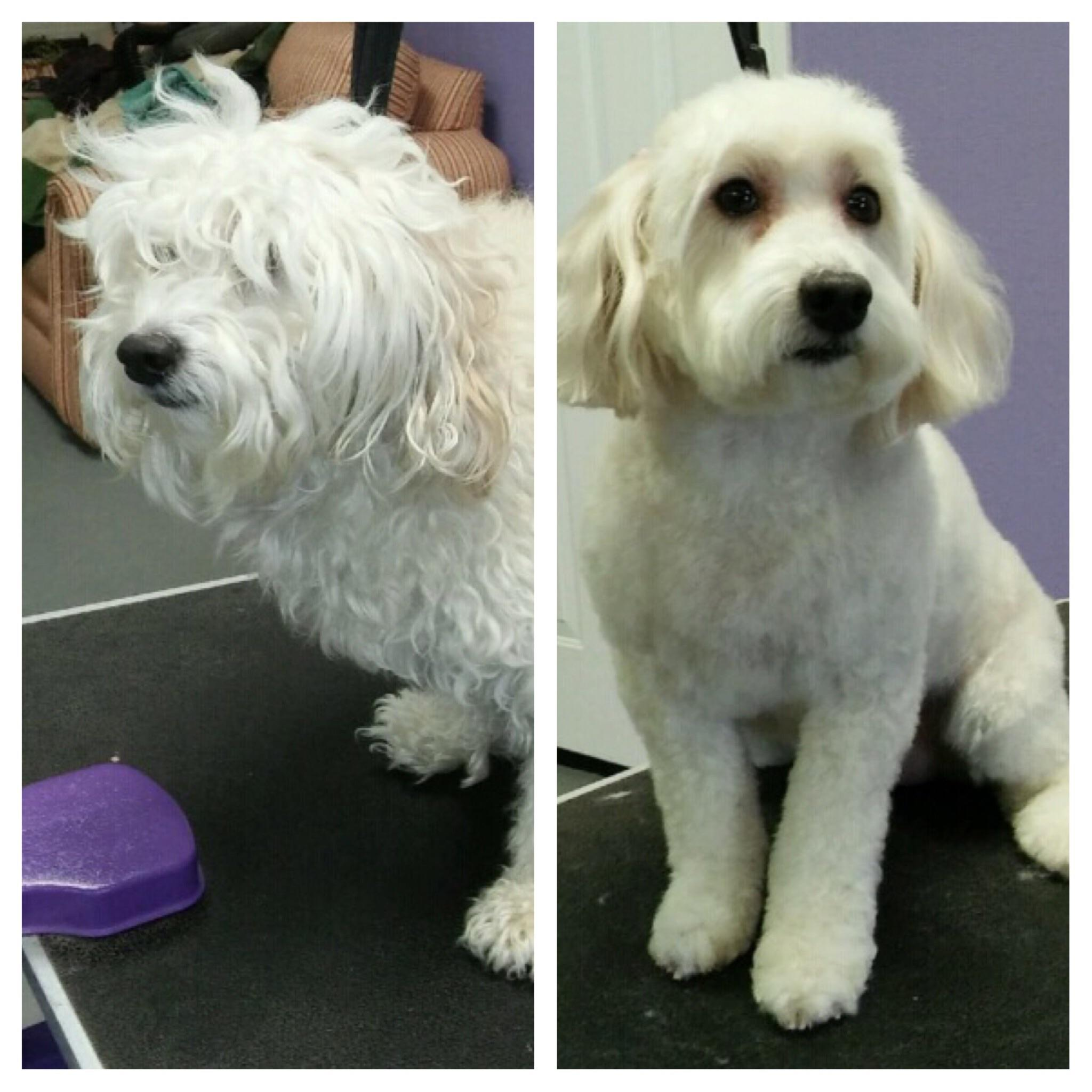 Dog Grooming In Bossier City La