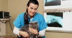age to neuter cat male