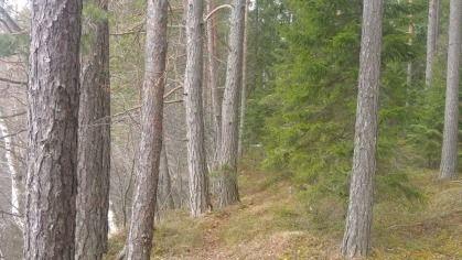 Länsi-Suomen Metsätilat Oy