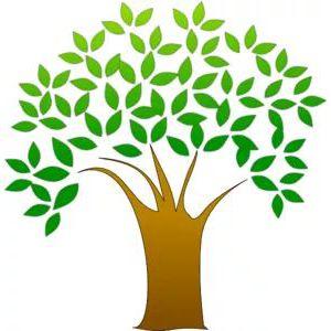 Westcountry Woodland & Tree Management Ltd - Saltash, Cornwall  - 07788 733185 | ShowMeLocal.com