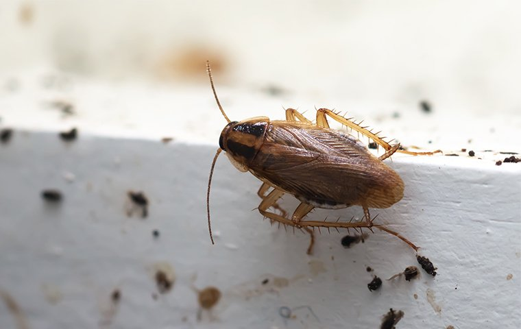 Evolve Pest Control Las Vegas