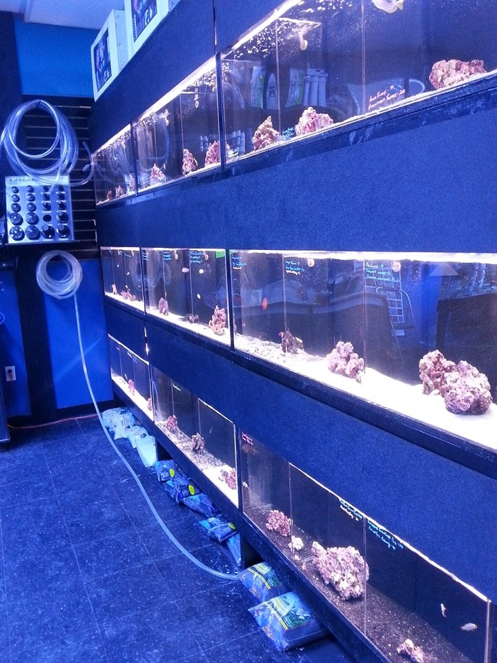 Reef oasis coupons near me in mentor 8coupons for Fish tank cleaning service near me